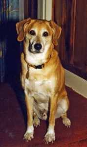 Beau, my dog that I lost 13 years ago.
