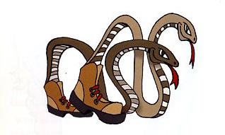 Bipedal snakes